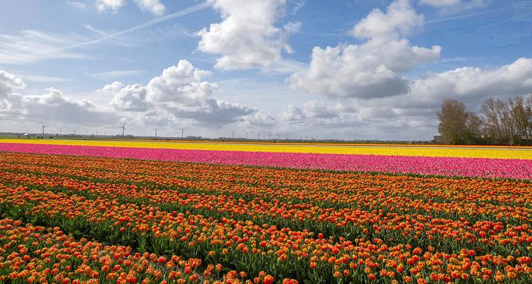 funerária - campo de flores - texto