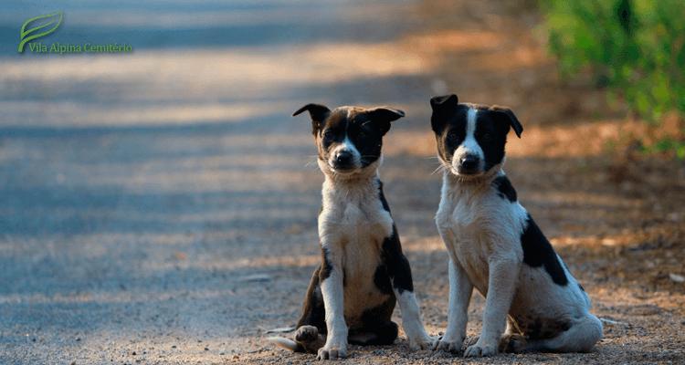 cachorrinhos em estrada - animais de estimação