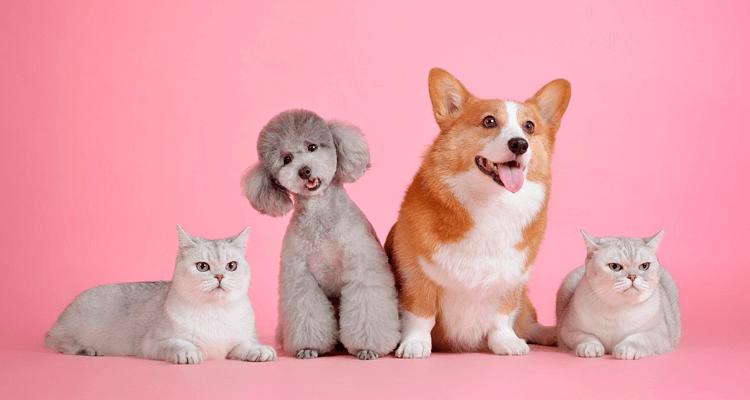 Cães e gatos em fundo rosa