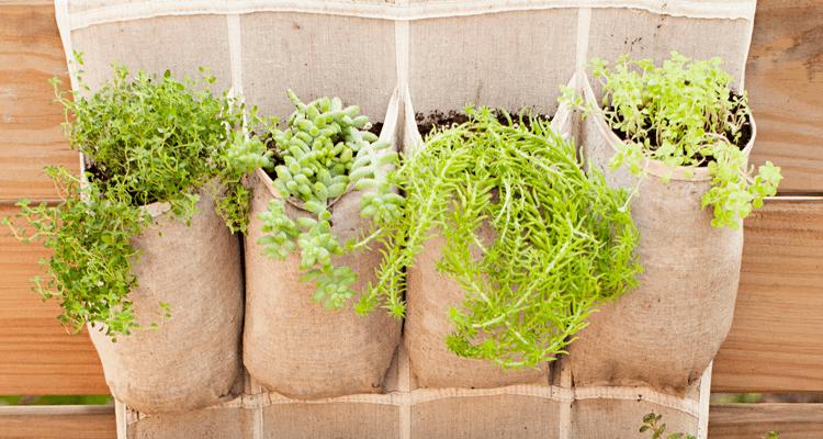 saquinhos com tipos diferentes de planta - horta